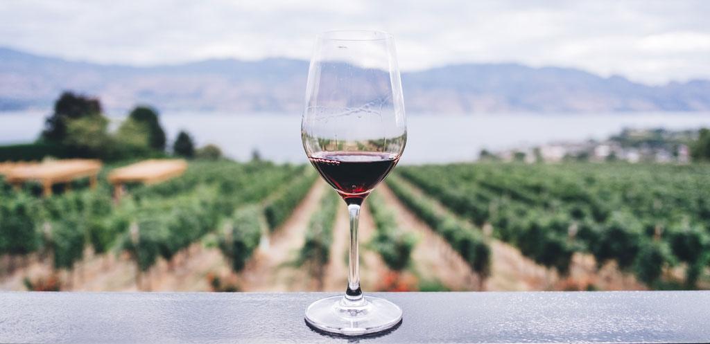 main grapes italy
