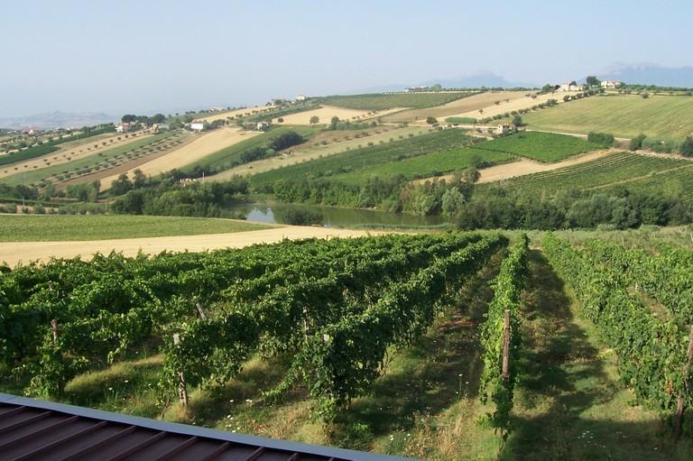 montepulciano vineyards in italy